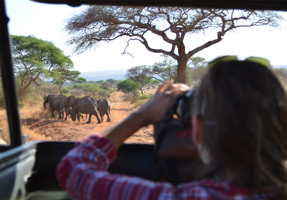Driving Safaris